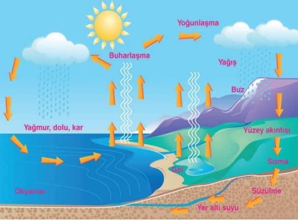 Hidrolojik döngü (su döngüsü)