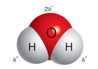 Su molekülünün kutuplu (polar) yapısı