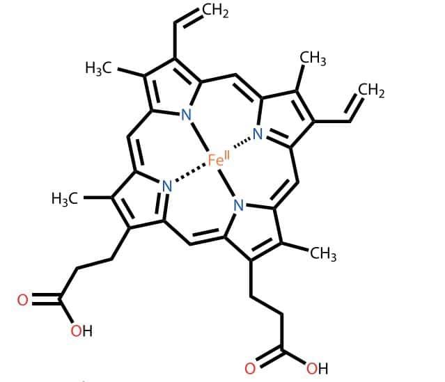 Fe2+ iyonları içeren hemoglobin maddesi